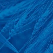 Jyga Technologies - Gestal