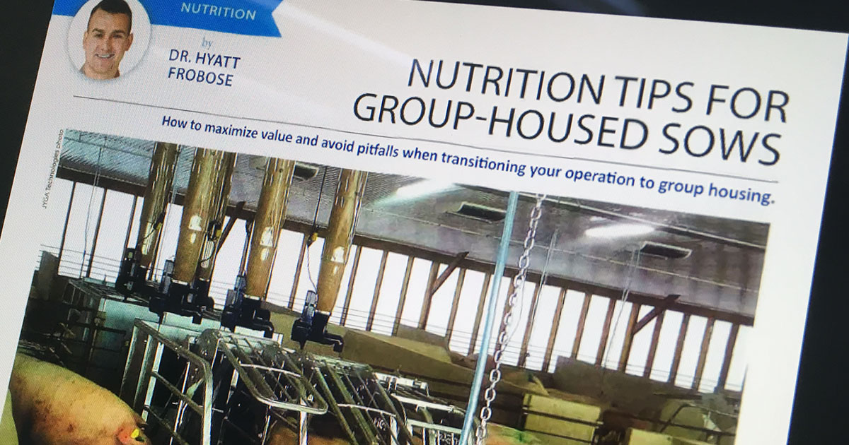 NUTRITION TIPS FOR GROUP-HOUSED SOWS
