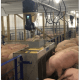 Gestal EVO - standalone swiner feeder