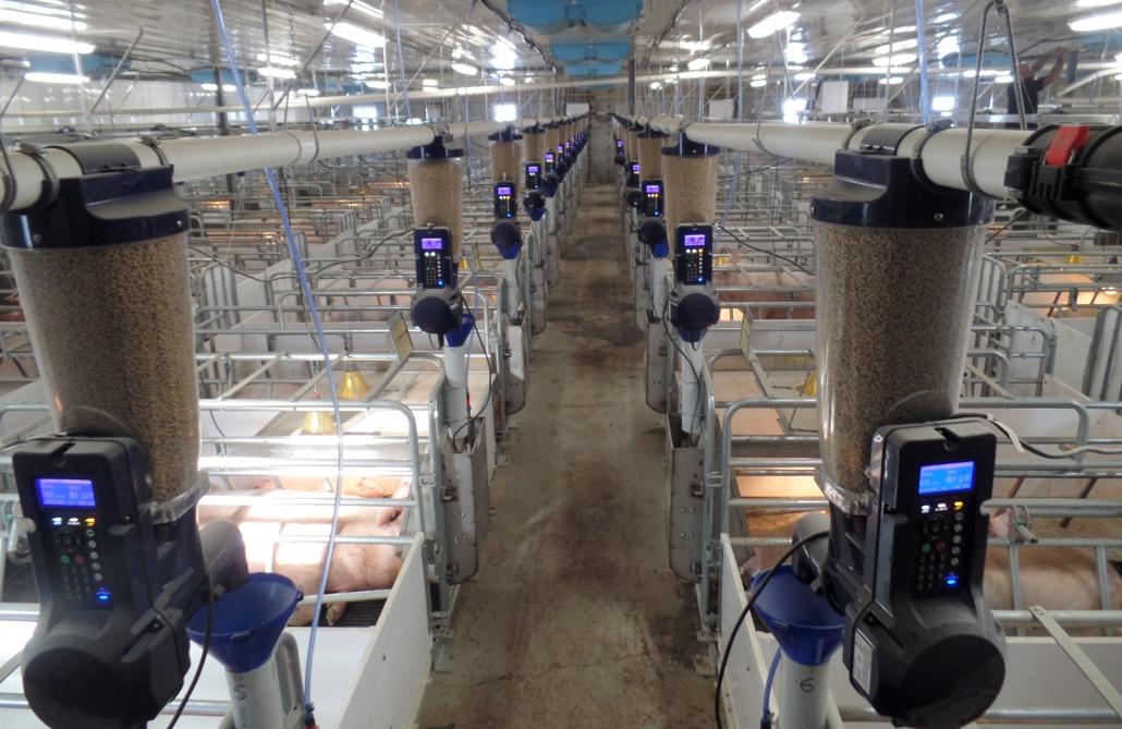Smart swine feeder system