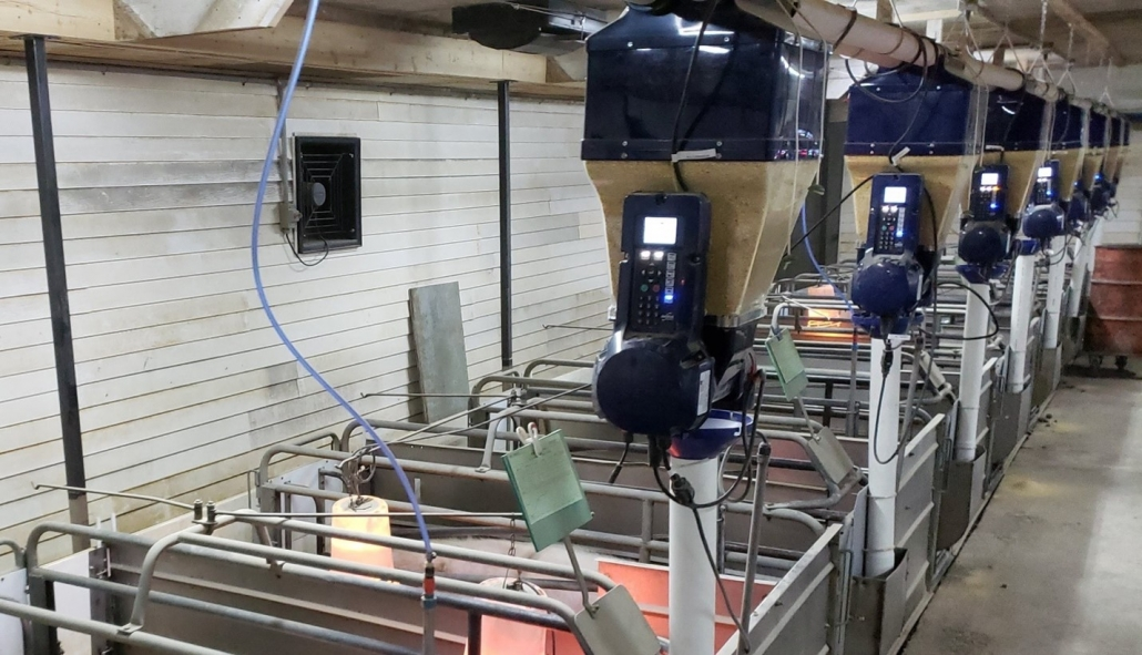Feed blending in lactation - Gestal Quattro